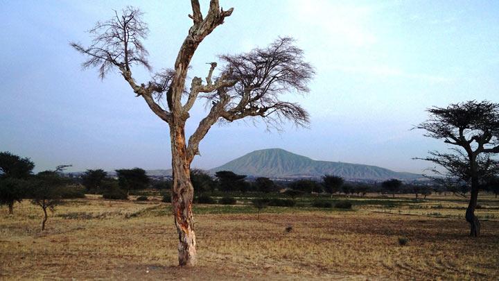 засохшее дерево на фоне горы в Эфиопии