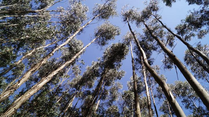 деревья на фоне неба в Эфиопии