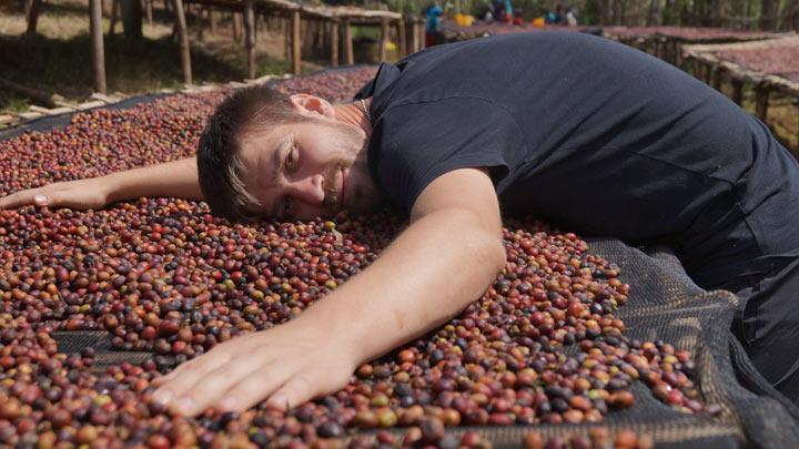 Тимур Дудкин в Эфиопии ягоды кофе